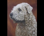Soft coated wheaten terier